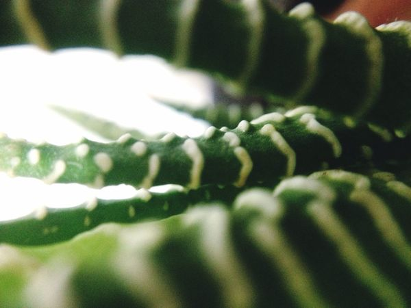 No People Selective Focus Growth Close-up Nature Indoors  Freshness