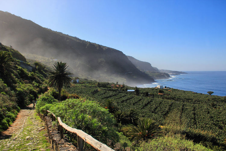 Banana Plants Beauty In Nature Canary Islands Cape  Day Landscape Mountain Nature No People Outdoors Plantage Scenics Sea Tenerife Travel Destinations Tree Vacations Water