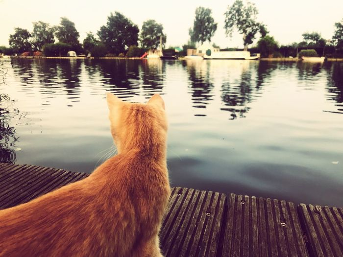 Brave Cat Cat Water Lake Tree One Animal Animal Plant Be Brave Animal Themes Nature Reflection No People Domestic Pets Domestic Animals Outdoors Day
