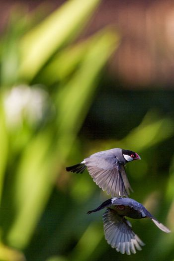 Wings Birds Of EyeEm  Nature Nature Photography SpreadYourWings Animal Themes Animals In The Wild Beauty In Nature Bird Birds Birds In Flight Cannonball Close-up Day Flying Focus On Foreground Mid-air Nature Near Miss No People Outdoors Spread Wings