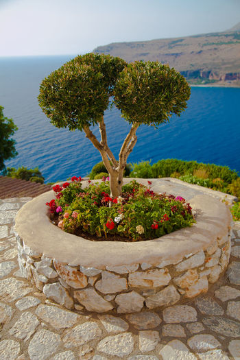 Mani,Greece. Mani Greece Landscape Beautiful Beautiful Nature Taking Photos Check This Out Hello World Enjoying Life View Sea And Sky Outside Photography Canon 5D Mark II Canon Colorful Enjoying Life Hapiness Art Travel Travel Photography Destination Blue Green Tree Olive Tree