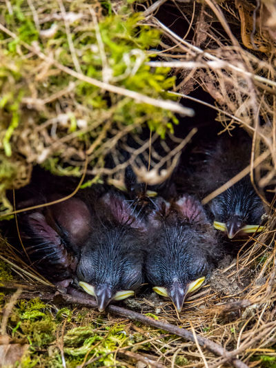 High angle view of bird in nest on field