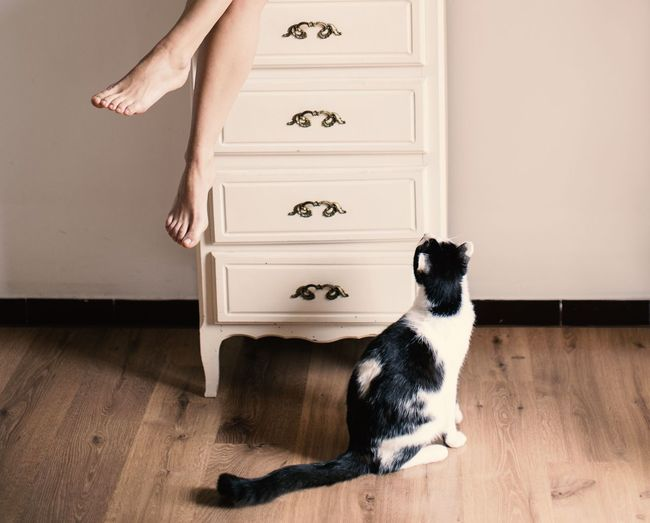 Cat looking at woman sitting on drawer at home