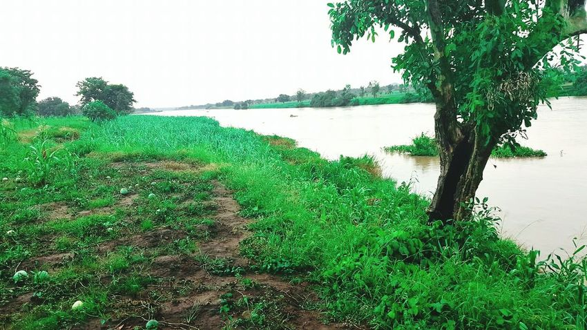 Landscape Nature Tree Tranquil Scene Scenics Water Green Color Beauty In Nature Outdoors Northern Nigeria