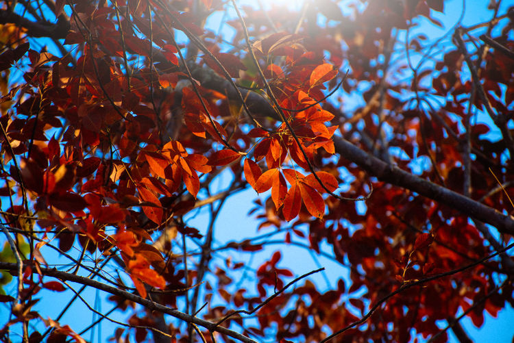 Autumn Beauty In Nature Branch Close-up Day Freshness Growth Leaf Low Angle View Nature No People Outdoors Tree