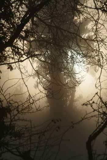 Foggy day.. Autumn Bare Tree Beauty In Nature Branch Close-up Day Dream States Ethereal Fog Foggy Foggy Weather Growth Low Angle View Nature No People Outdoors Silhouette Silhouette Silhouette_collection Sky Softness Sunset Tranquility Tree The Great Outdoors - 2017 EyeEm Awards