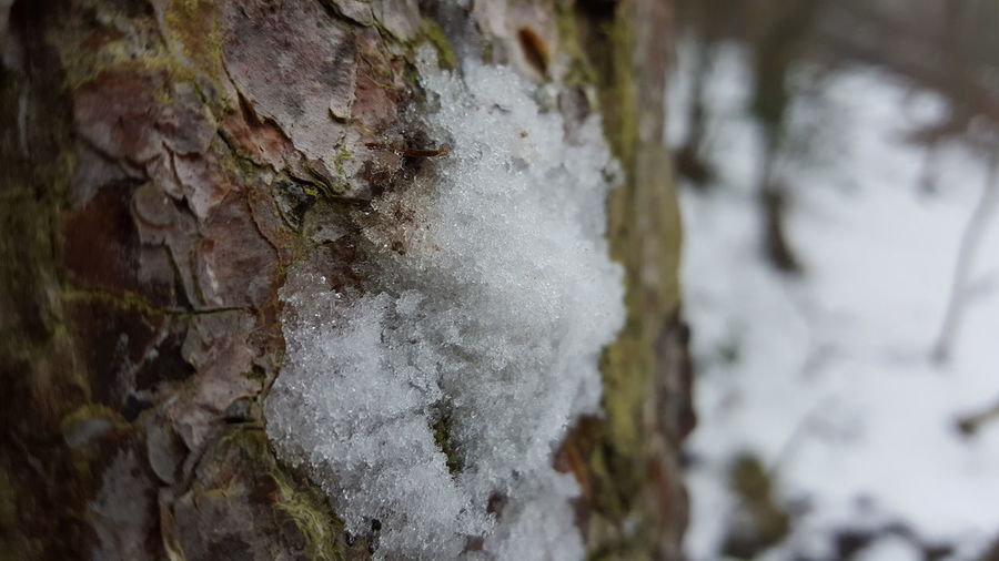 No People Snow Tree Bark Winter Cold Cold Temperature Wales Loggerhead Woods Wood