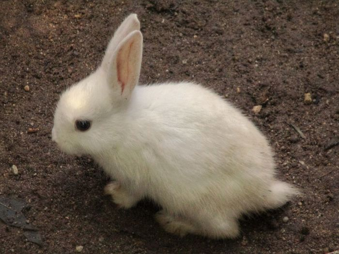 Lovely rabbit Animal Outdoors Nature Animal Themes กระต่ายตัวน้อยๆ กระต่าย Pets High Angle View Close-up Rabbit Rabbit - Animal Animal Ear Animal Hair Hairy