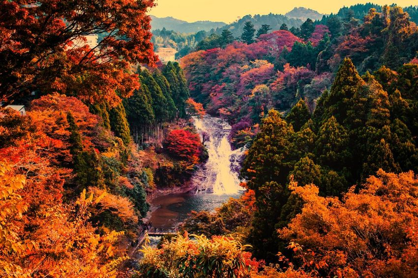 Tree Beauty In Nature Autumn Nature Scenics Forest Tranquil Scene Outdoors No People Tranquility Change Growth Day Mountain Waterfall Water Sky