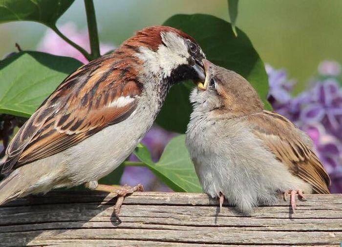 Sparrow Animal Animal Themes Animal Wildlife Bird Animals In The Wild Vertebrate Group Of Animals