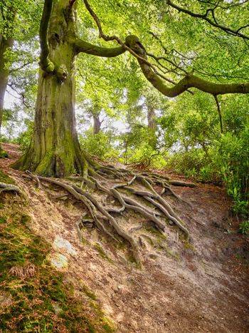Beauty In Nature Branch Day Forest Green Color Growth HDR Hdr_Collection Landscape Nature No People Outdoors Scenics Tranquility Tree Tree Roots  Tree Trunk