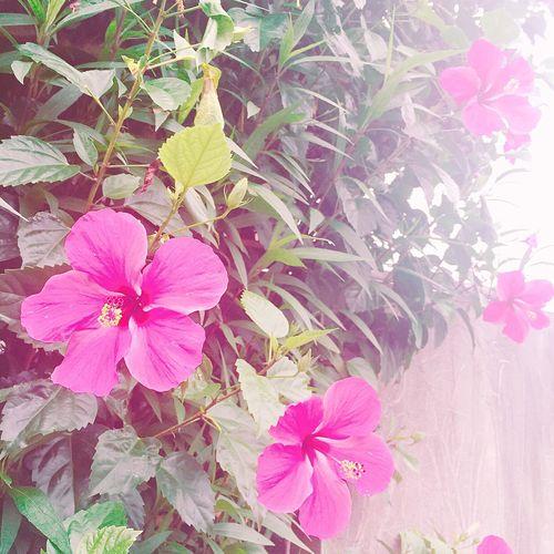 Taiwan Flower Flowers Hi! Relaxing Taking Photos Enjoying Life Hello World Beauitful Day First Eyeem Photo