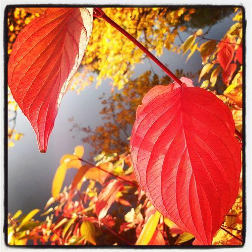 Nature_collection Herbstfarben Schwanenteich Gießen