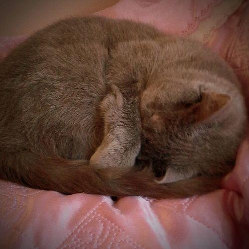 спит мая кошечка🐱🐈😺