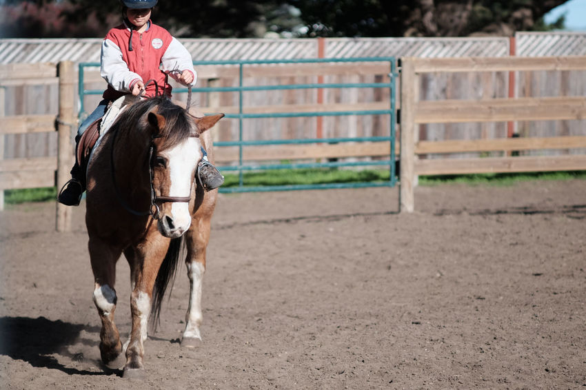Animal Themes Day Domestic Animals Full Length Horse Horseback Riding Livestock Mammal One Person Outdoors People Real People Riding