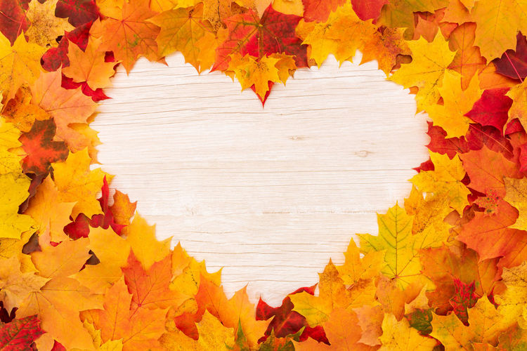 Close-up of heart shape on autumn leaves