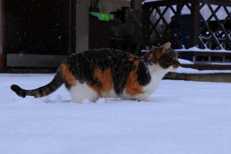 Cat relaxing in snow
