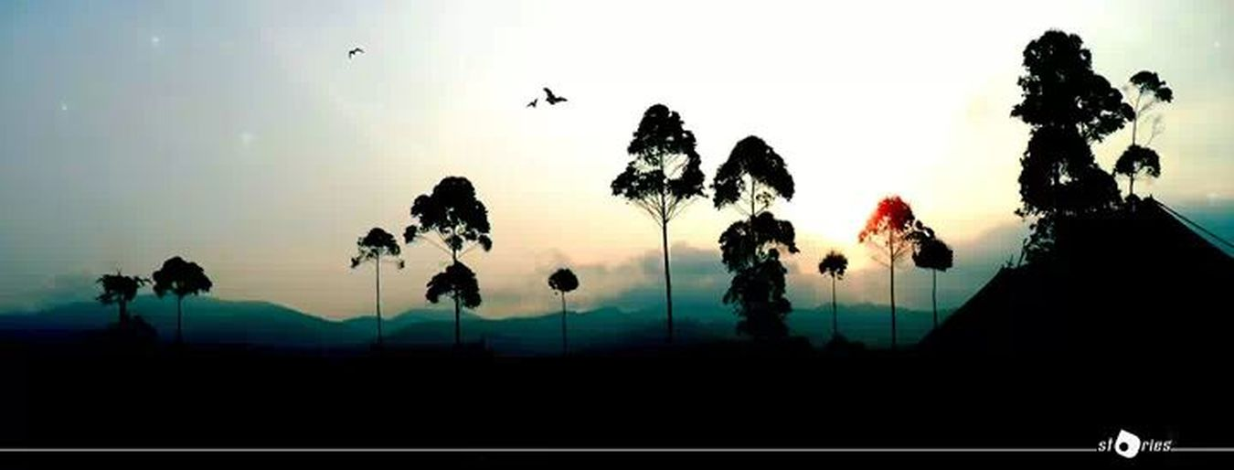 Landscape Hill INDONESIA