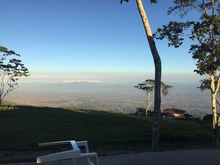 La neblina Tree Nature Scenics Landscape