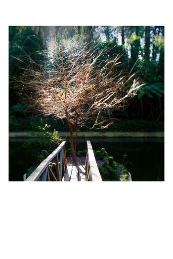 """Dear Light, from the series """"Recover"""", Buçaco PT Branches Light Project Photography Photooftheday Frame Art Water Nature Plant Day Lake No People Tree Tranquility Sunlight Beauty In Nature Tranquil Scene Outdoors"""