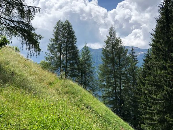 The clouds are arriving. Happy Sunday, dear friends 💐☀️🙋🏻♀️ Italia Italy Italien South Tyrol Alto Adige Südtirol Ultental Plant Tree Growth Green Color Beauty In Nature Sky Cloud - Sky Tranquility Nature Day No People Scenics - Nature Tranquil Scene Land Field Low Angle View Outdoors Landscape