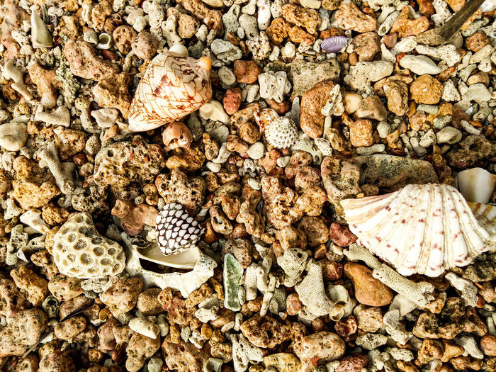 High angle view of seashell on pebbles