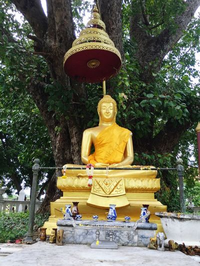 Religion Spirituality Buddha Sculpture Statue Human Representation Art And Craft Tree Art Creativity Place Of Worship Idol Branch Temple - Building Tree Trunk Large Gold Golden Color Gilded Day Buddha Statue Thailamd