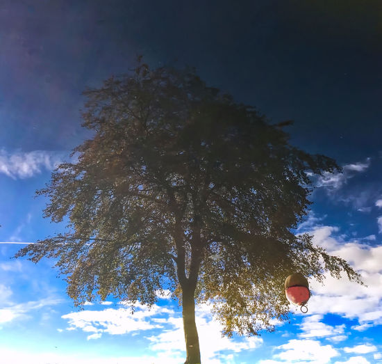Bouy Day Growth Low Angle View Nature No People Outdoors River Sky Tree Upsidedown Reflection