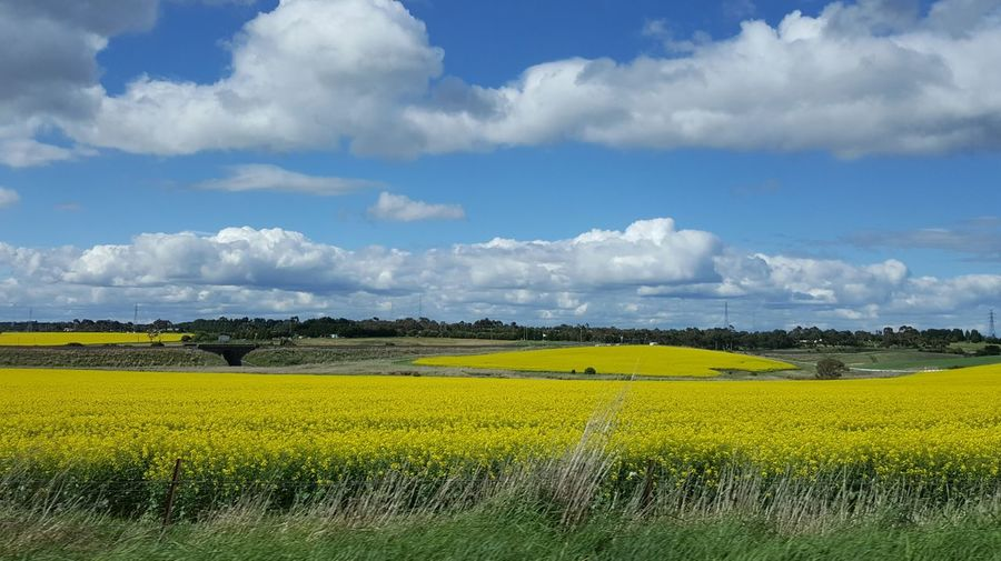 beautiful,landscape,yellow,blue,sky,clouds,spring Paint The Town Yellow