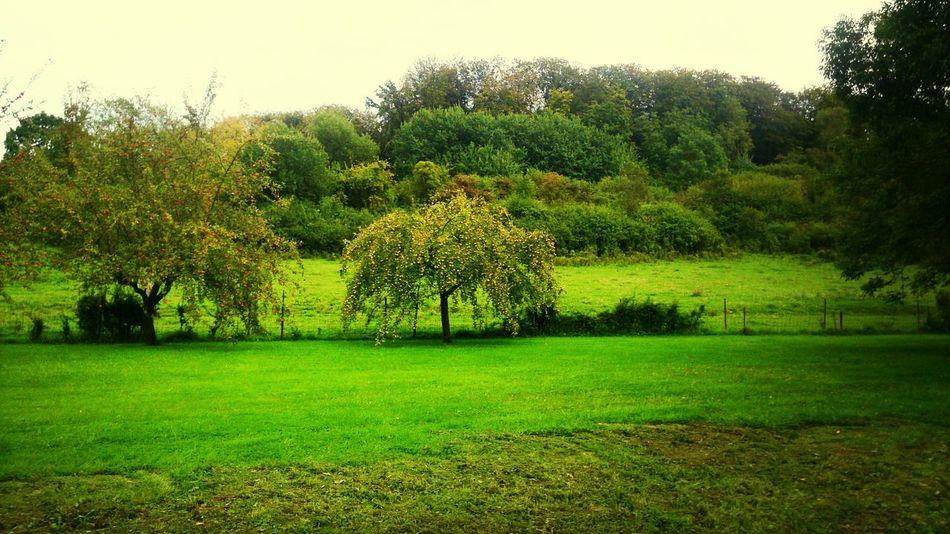 Landscape Luxembourg Summershots Lintgen