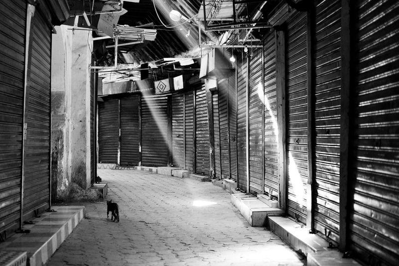 When No One Is Around The City Light Alley Building Cat City City Life Closed Day Dust Illuminated Leak Light Market Marrakech Medina Narrow Shutter Souk Street Sunrays The Way Forward Tourism Travel Urban
