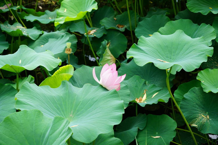 Water Lily My
