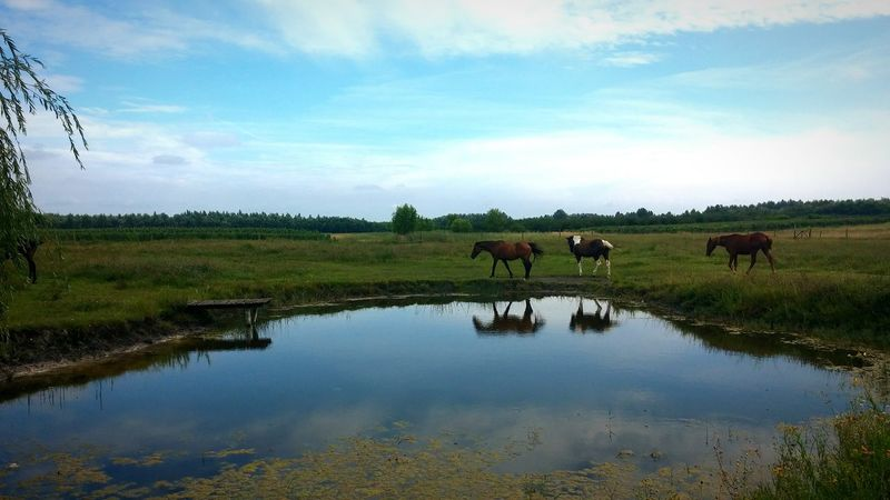 Nature Landscape Grass Outdoors No People Day Horses EyeEm Selects Enjoying Life Horse Photography  Pony❤️ Horse Life Animals In The Wild Running Free Himmel Und Wolken Summer Flusslandschaft