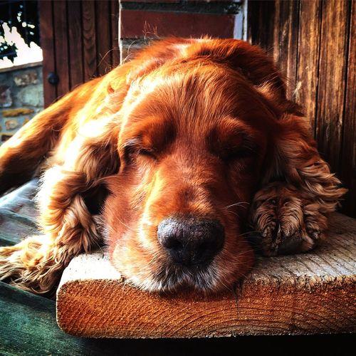 Close-up of dog sleeping on park bench