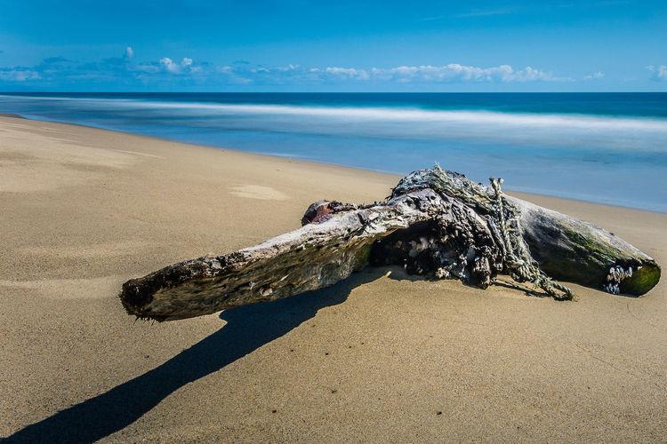 Driftwood At Beach Against Sky