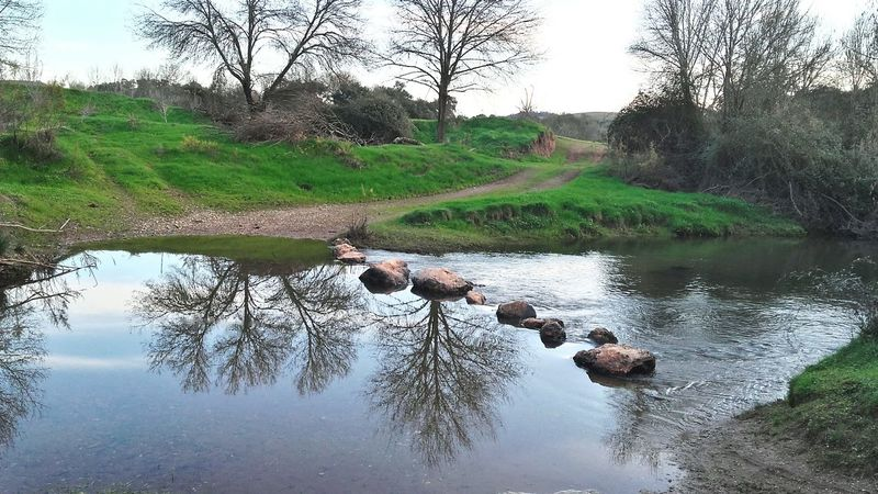 Trees Reflection Water Nature Sky Beauty In Nature Outdoors Rural Scene Day Tree Winter Portugal Odemira