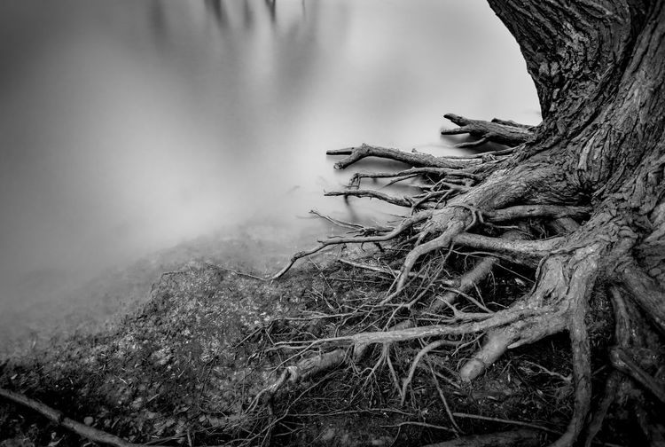Relaxing Pictures Black & White Meerbusch Reflection Rhein Rheinufer Shades Of Winter Tranquility Winter Beauty In Nature Blackandwhite Day Grey Long Exposure Nature No People Outdoors Reflections River Rocks Roots Roots Of Tree Tranquil Scene Tree Water