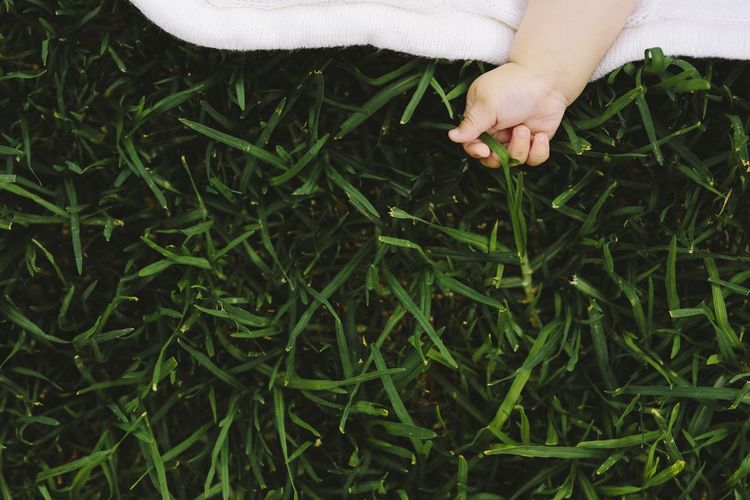 Midsection of woman touching plant on field