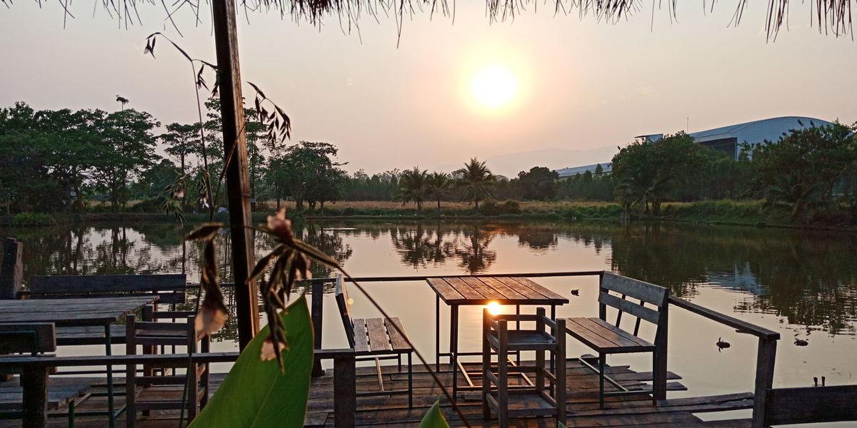 Tree Water Lake Sunset Dawn Reflection Sun Sky Horizon Over Water Landscape