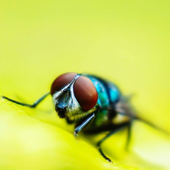 stay fly Fly Insect Photography Insects  Macro Photography EyeEm Selects Insect Animal Themes Animal Eye Macro Close-up Looking At Camera