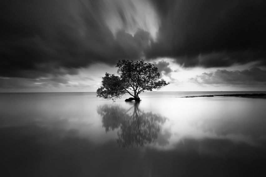 Lonely tree reflection Mood Fineart Mirror BigMirror Longexpo Great Shot Longexposure Blackandwhite Bnw Lonely Tree Tree Cloud - Sky Water Silhouette Sky Nature EyeEm Ready   EyeEmNewHere AI Now