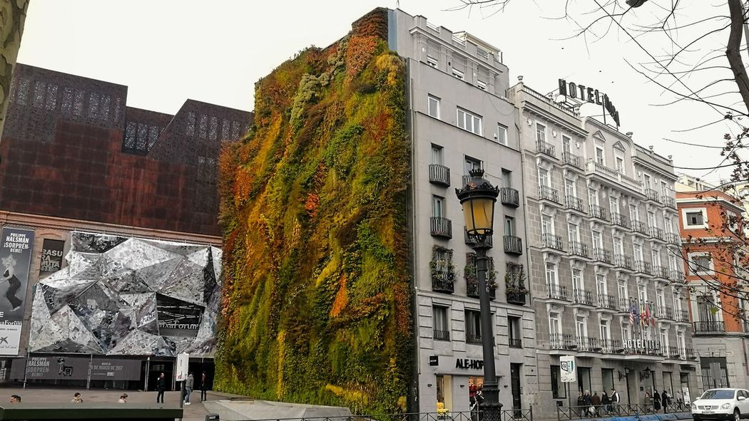 Adapted To The City Nature In The City Wall Of Green Green Plants Nature Built Structure Architecture Building Exterior Outdoors Day City Beauty In Nature Eyem Spain Eyem Street Photo Eyem Streets Eyem Street Eyem Architecture Eyem Buildings Eyem Best Shots Eyemphotography Eyem Eyem Shot EyeEm Nature Lover Eyem Best Shots Nature_collection