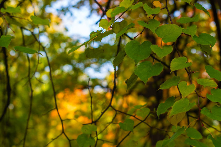 Low angle view of leaves on tree against sky