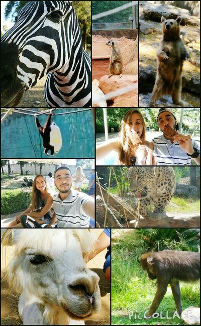 Fun day at the zoo 😘