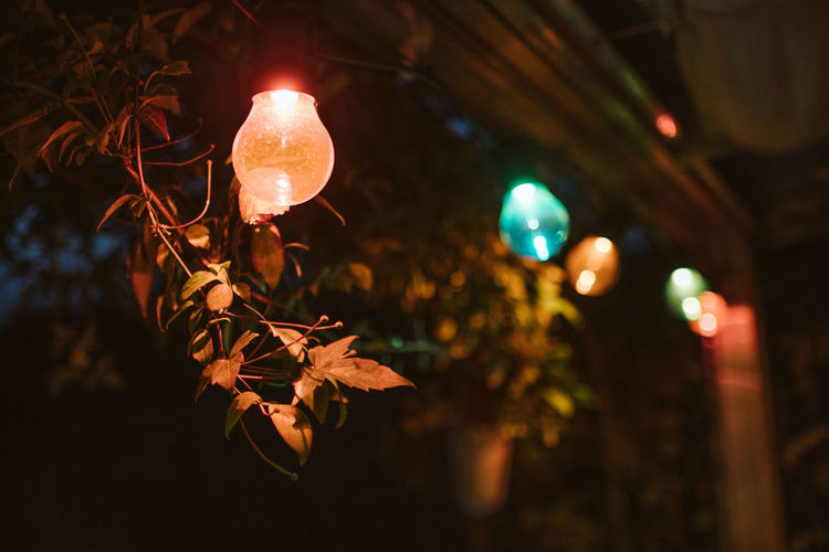 Colors Lightstrip Bulb Change Close-up Dark Decoration Electricity  Focus On Foreground Glowing Illuminated Leaf Light Light - Natural Phenomenon Lighting Equipment Low Angle View Nature Night No People Outdoors Plant Plant Part Tranquility Tree