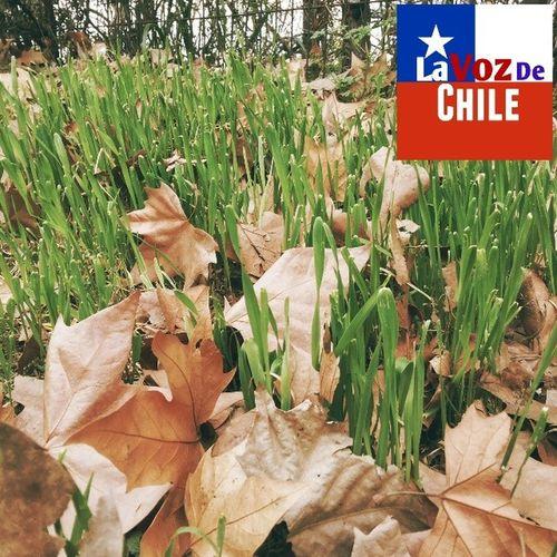 Natural LaVozDeChile Cerro Sancristobal