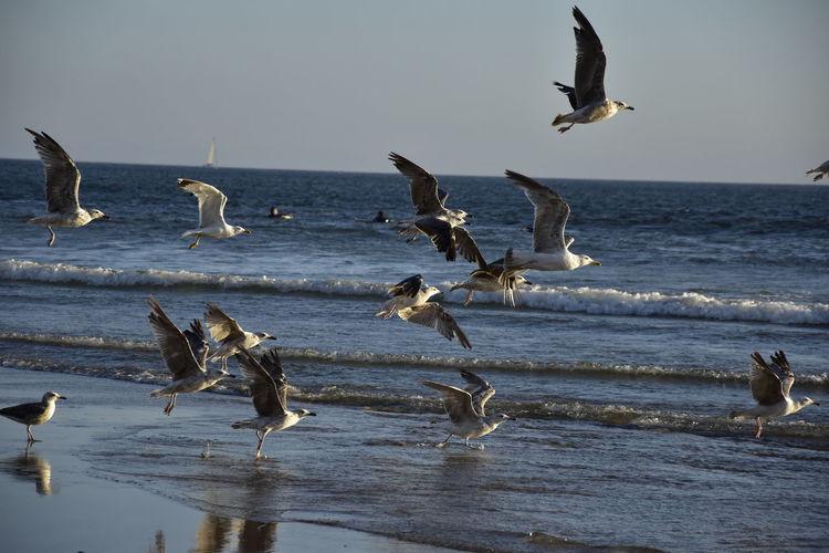 Seagulls flying at sea shore