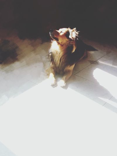 One Animal Animal Themes Pets Domestic Animals Mammal Domestic Cat Tortoiseshell Cat Indoors  No People Feline Day