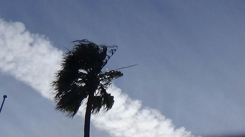 Vallejo,ca Eyeem Northen California Palm Trees Chemtrails Bay Area California Dreaming Poison Chemtrail Planes