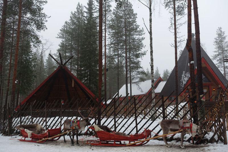 Deer Finland Animal Themes Cold Temperature Outdoors Rovaniemi Santa Claus Village Snow Winter